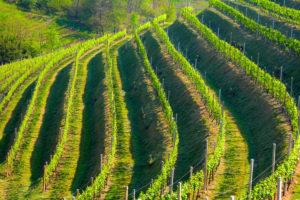 wine roads Valdobbiadene